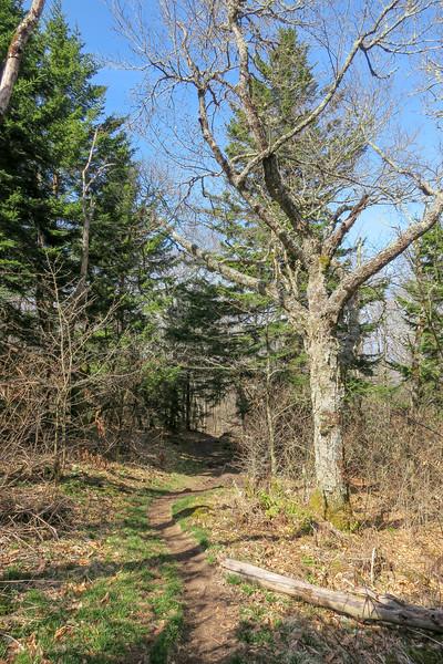 Snowball Trail -- 5,300'