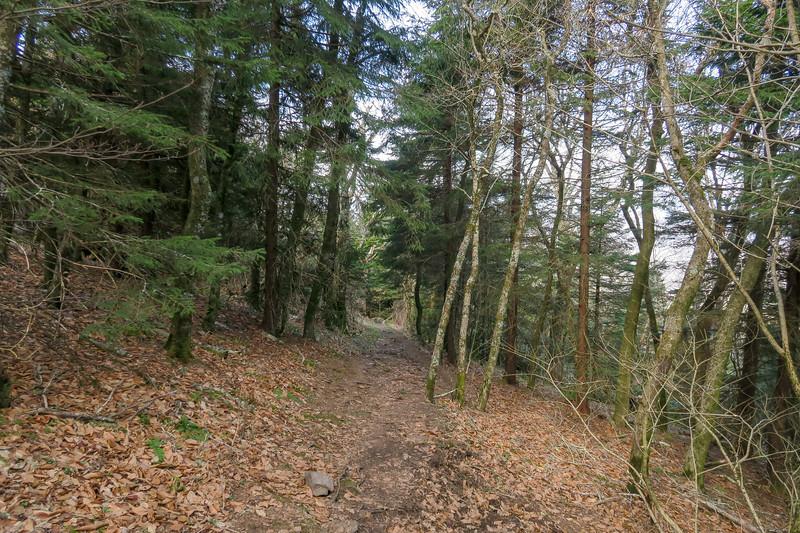 Snowball Trail -- 5,350'