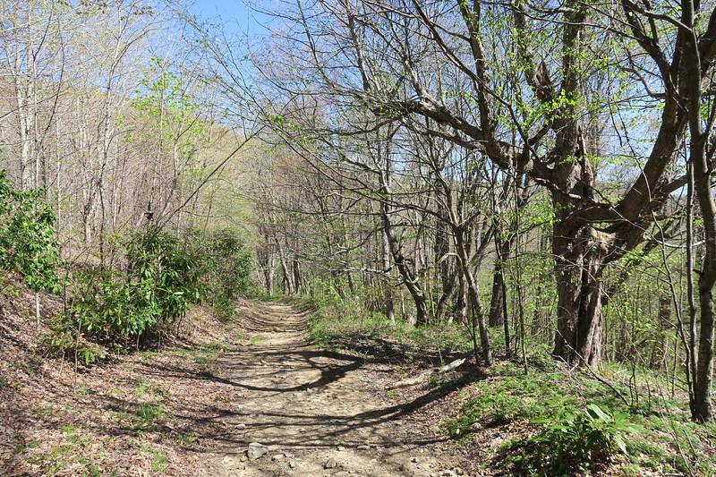 Buckeye Ridge Trail -- 4,300'