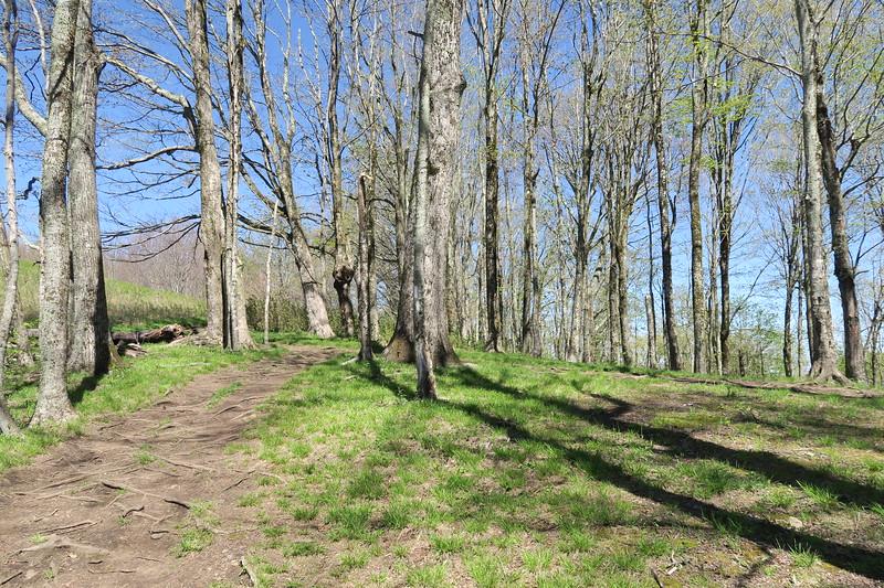 Appalachian Trail -- 4,430'