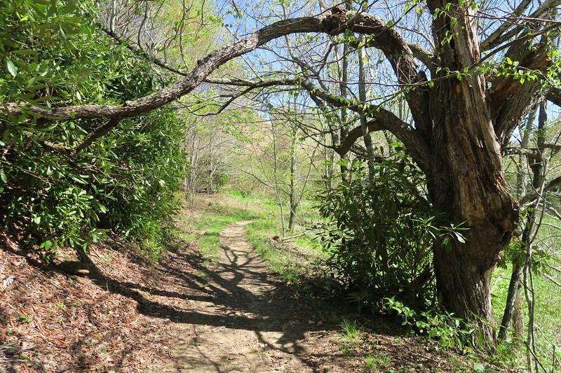 Buckeye Ridge Trail -- 4,280'