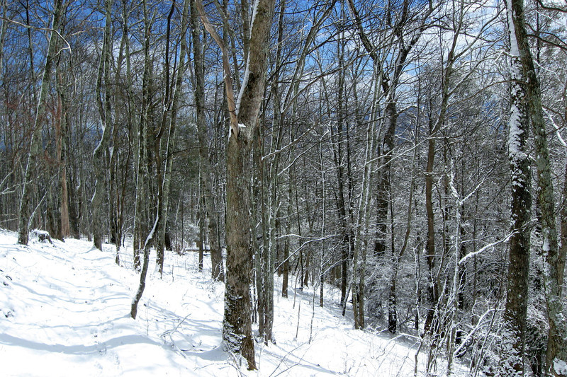 Upon entering the woods, I was so enthralled by the snow-encrusted trees that I totally missed where the trail turned downhill...