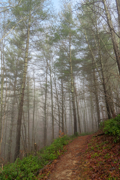 Appalachian Trail -- 2,450'