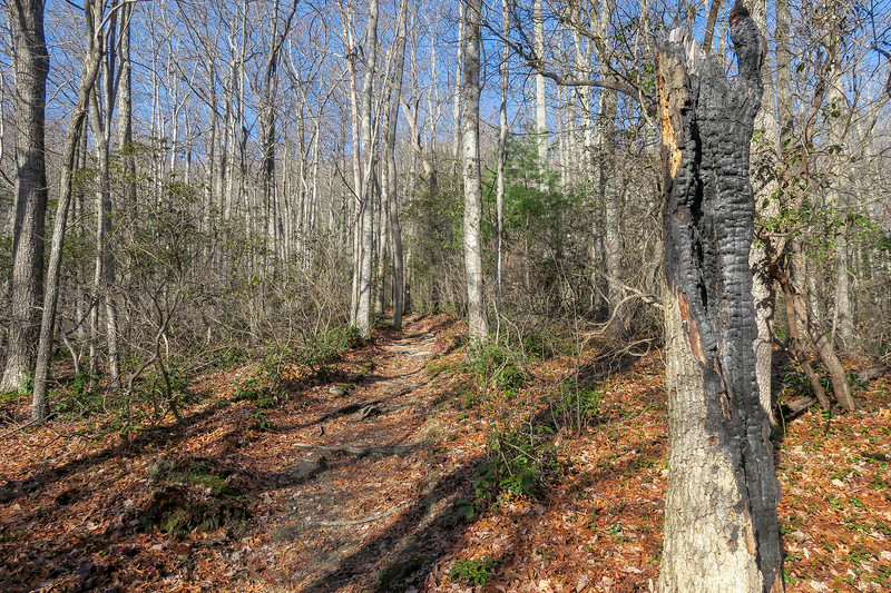 Appalachian Trail -- 3,020'