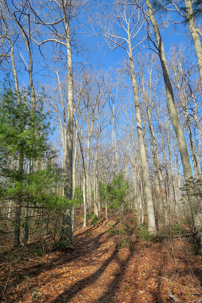 Appalachian Trail -- 2,930'