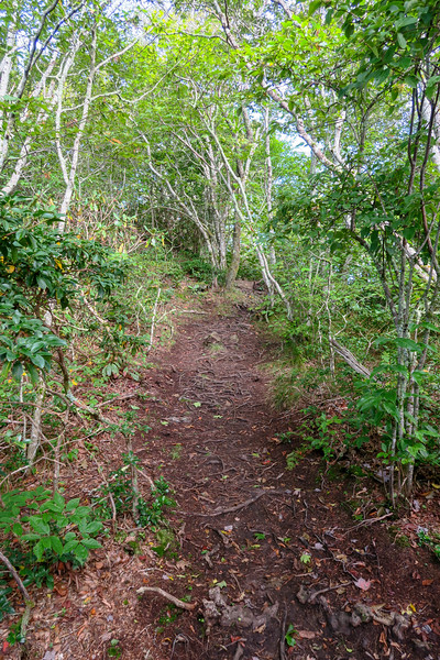 Snowball Trail -- 5,240'