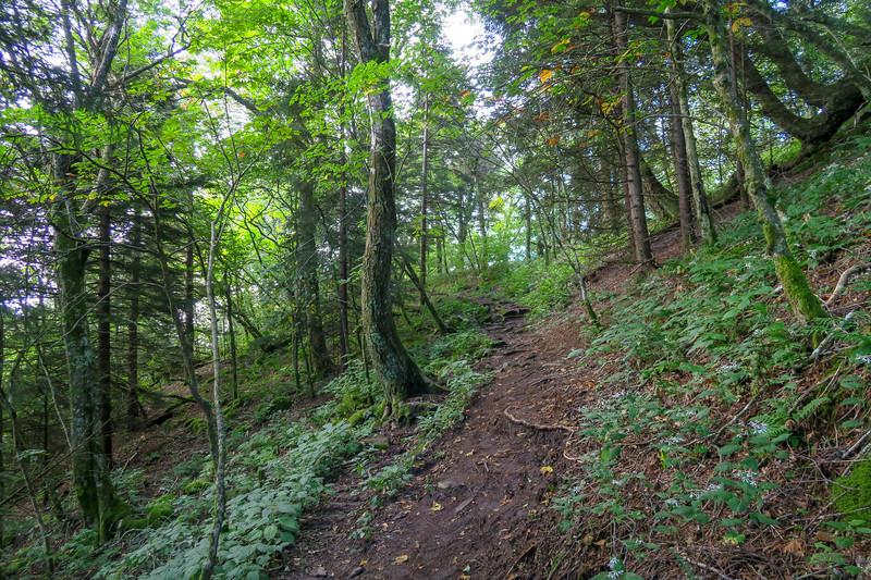 Snowball Trail -- 5,120'