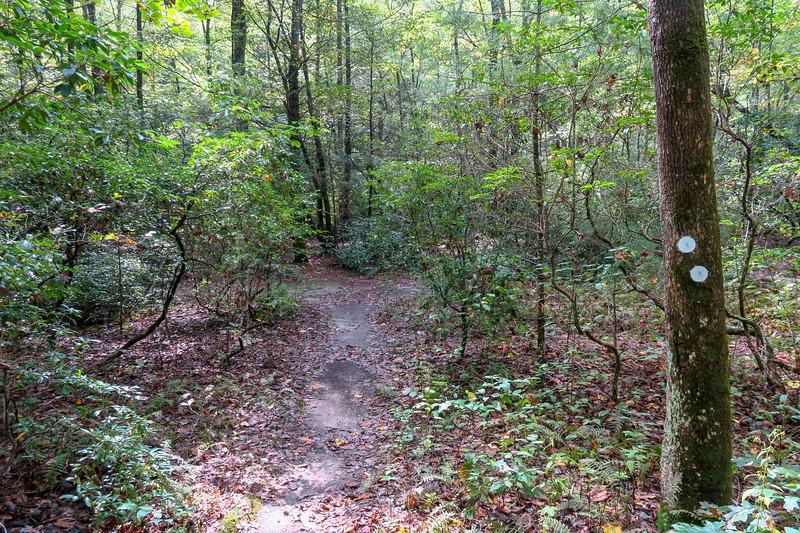 North Harper Shortcut-North Harper Creek Trail Junction