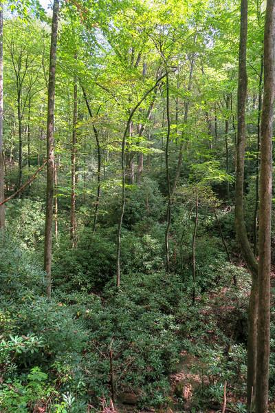 North Harper Shortcut Trail