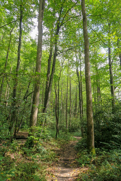 North Harper Creek Trail