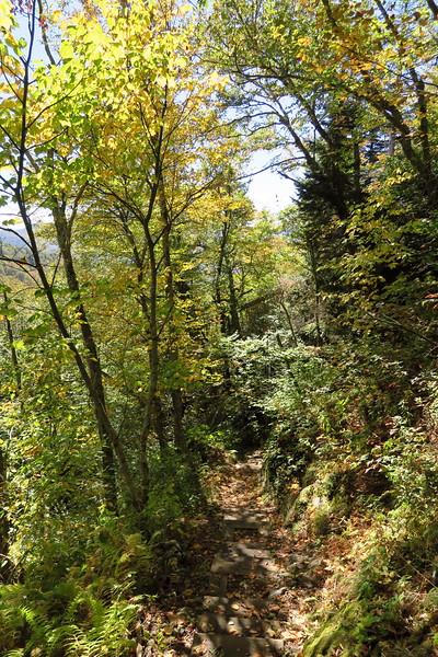 Big Butt Trail -- 5,500'