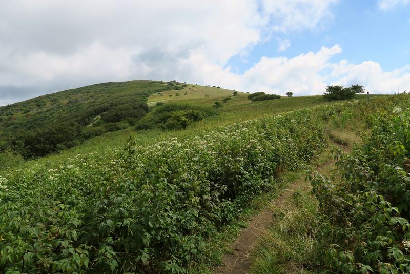 Appalachian Trail - 5,240'