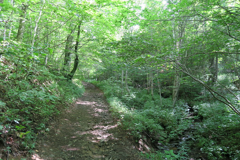 Overmountain Victory Trail - 4,250'