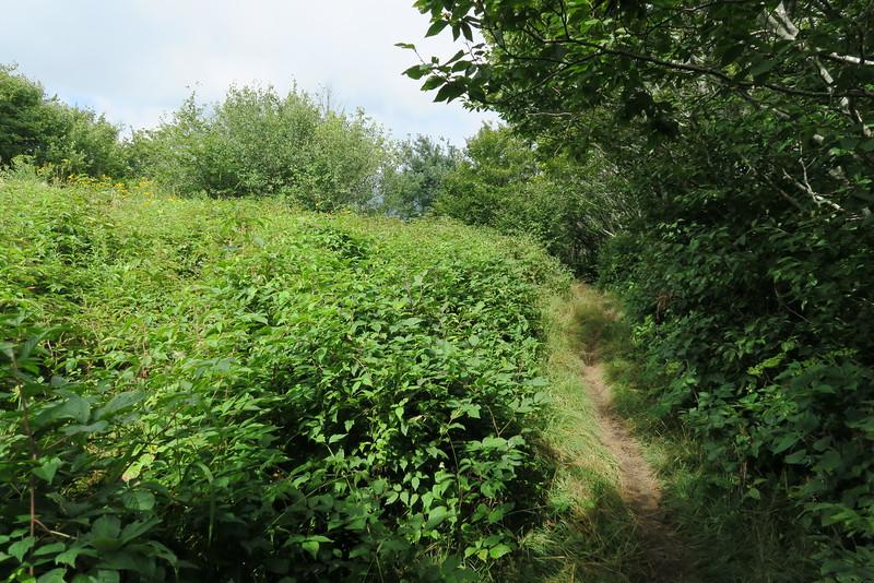 Appalachian Trail - 5,180'