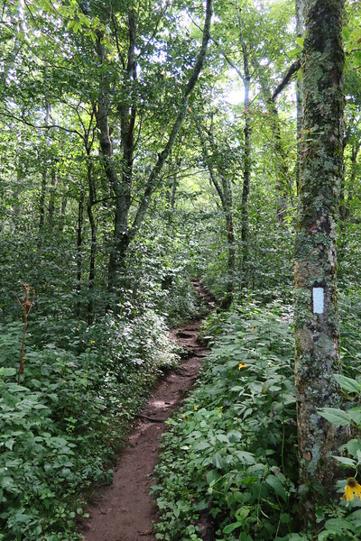Appalachian Trail - 4,700'