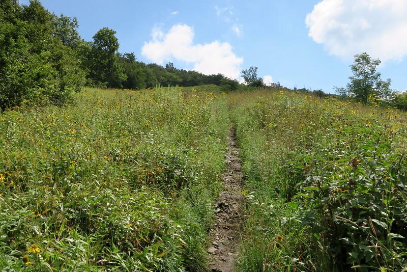 Appalachian Trail - 4,950'
