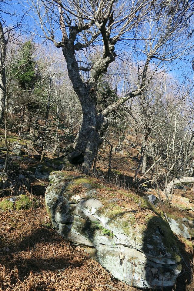 Blue Ridge Pinnacle Trail -- 5,350'
