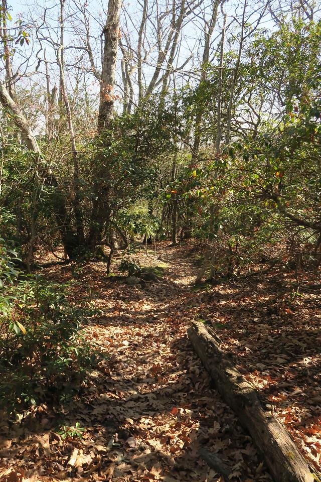 Graybeard Trail -- 4,880'