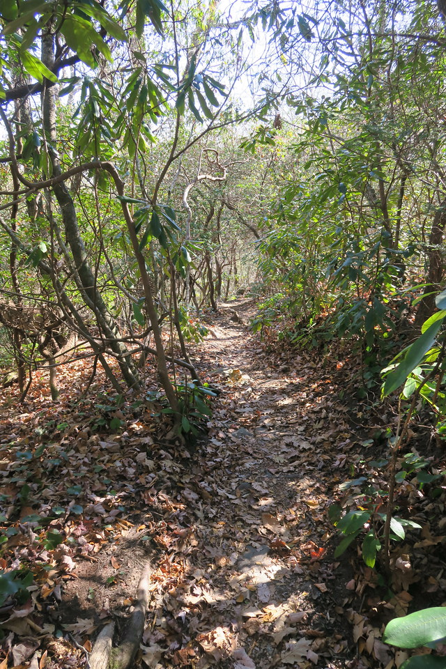 Graybeard Trail -- 4,520'