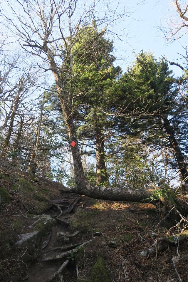 Blue Ridge Pinnacle Trail -- 5,600'