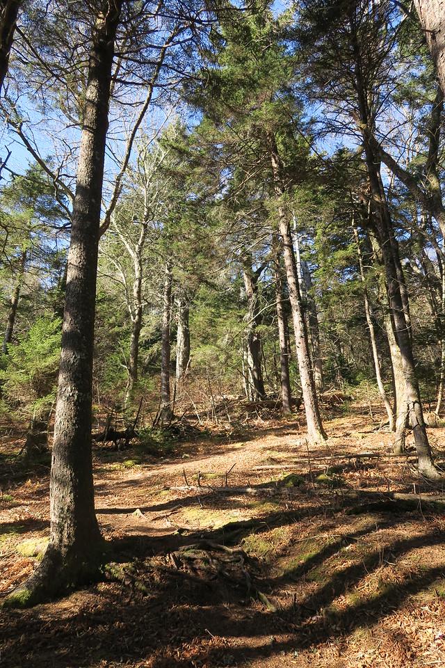 Blue Ridge Pinnacle Trail -- 5,200'