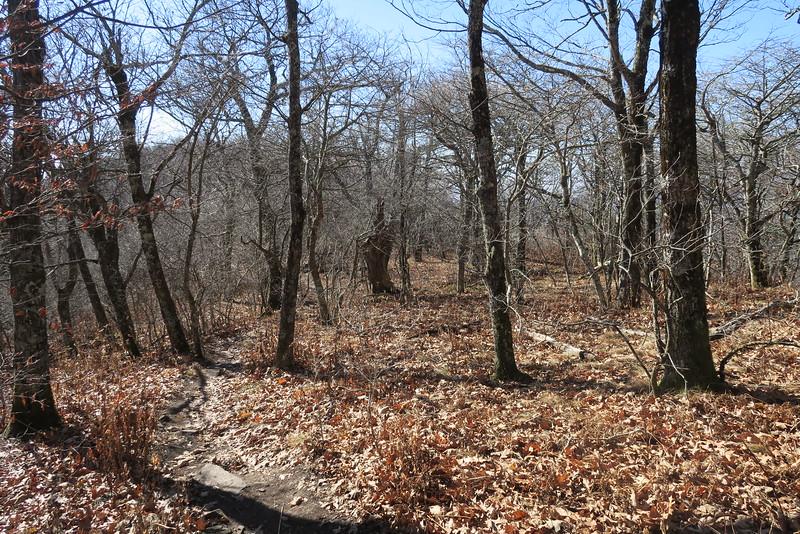 Graybeard Trail -- 5,300'