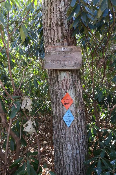Graybeard-Walkers Knob Trail Junction -- 4,720'