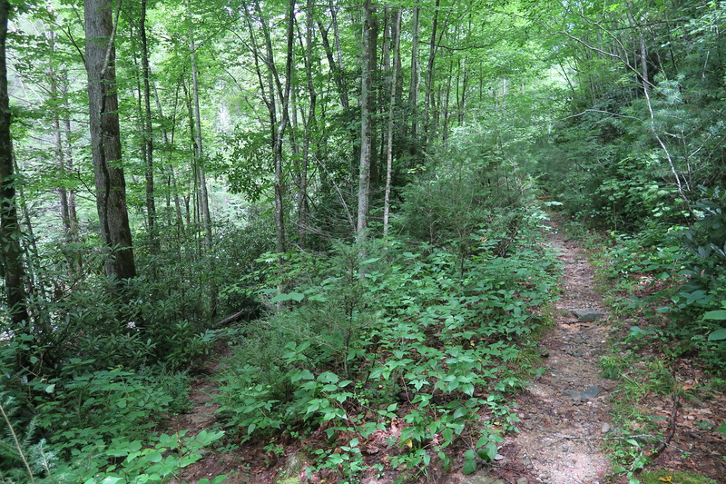 Greentown Shortcut Trail