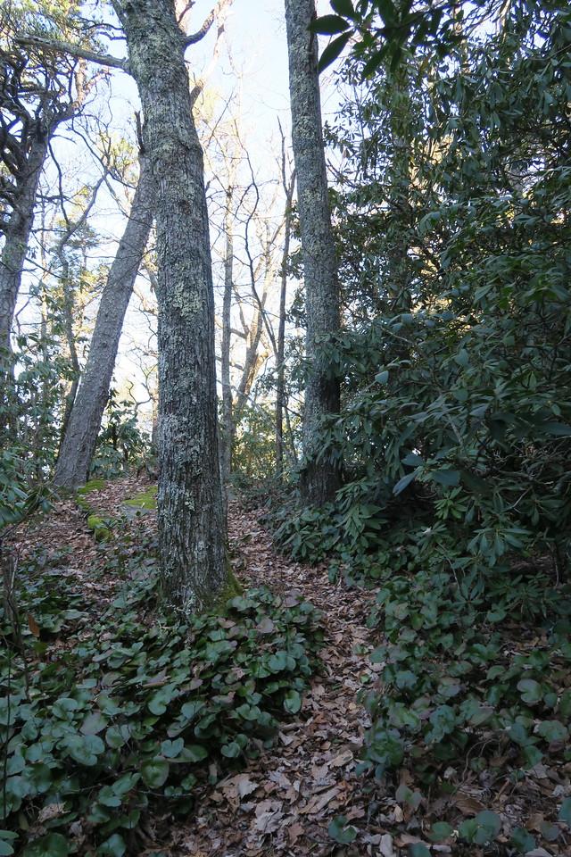 Ledge Trail