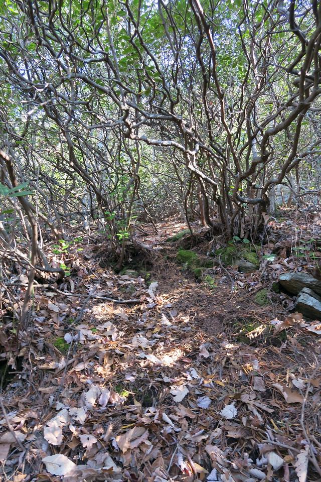 (near) Ledge Trail