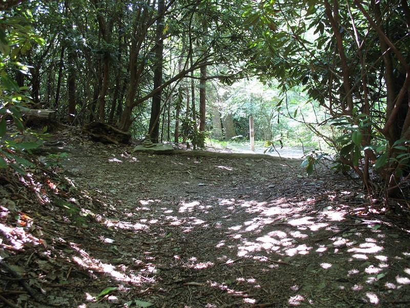 Hawksbill-Jonas Ridge Trail Junction