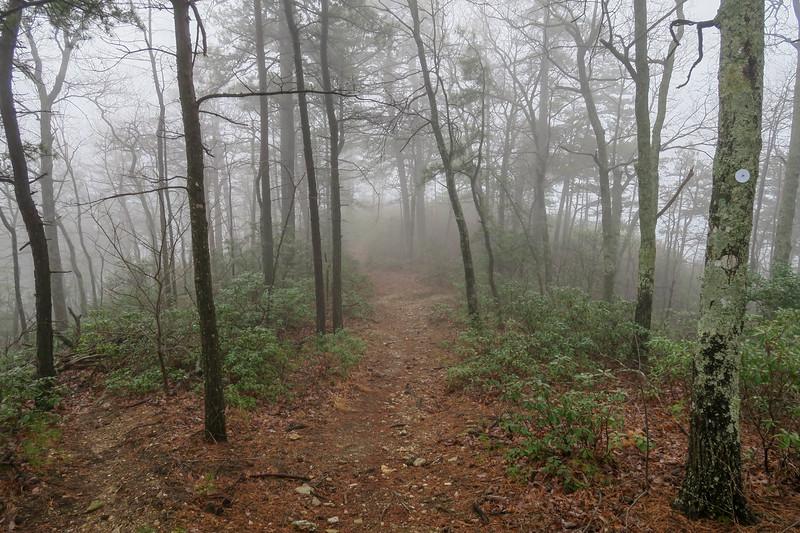 Mountains-to-Sea Trail -- 1,950'