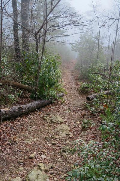 Mountains-to-Sea Trail -- 2,250'