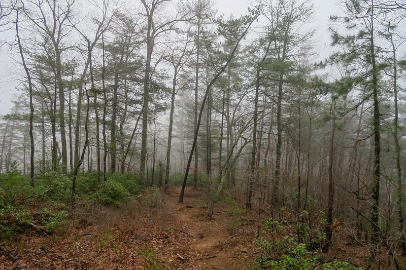 Mountains-to-Sea Trail -- 1,780'