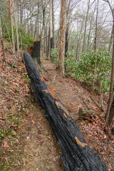 Leadmine Trail -- 1,670'