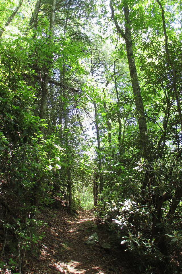 The increasing heat of the day, along with the strenuous ascent, made me appreciate the bits of shade that were offered by the forest...