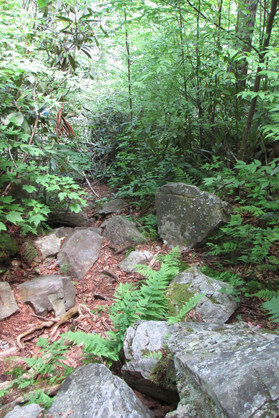 Just because I was now on a marginally more well-traveled trail didn't mean the terrain got any smoother...