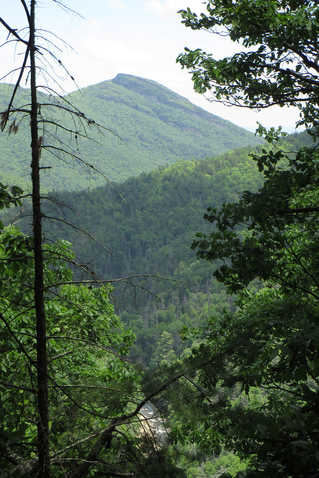 A break in the trees reveals what I had just finished climbing...the Linville River rushes by silently 1000' below while the familiar profile of Hawksbill Mountain rises beyond...