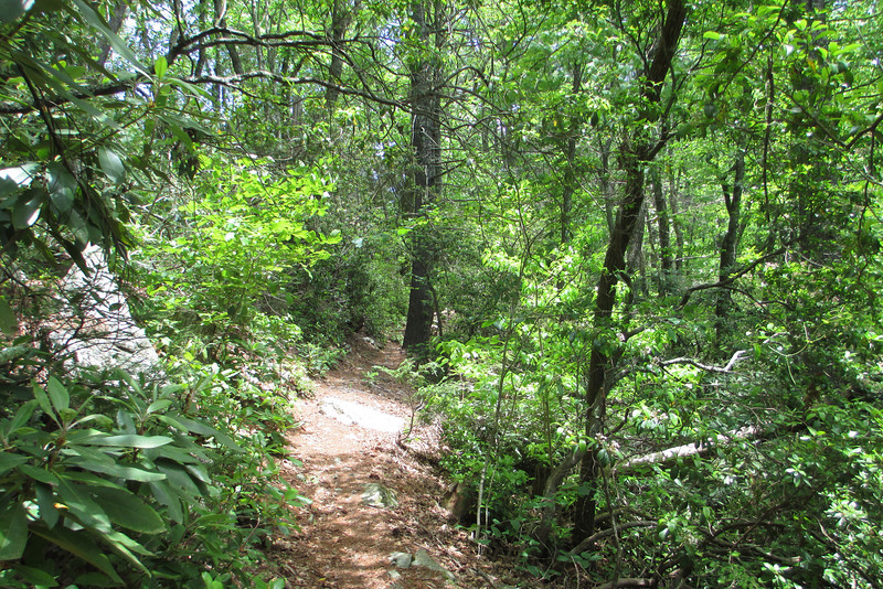 The Linville Gorge Trail as it approaches the Bynum Bluff Trail from the south...
