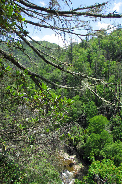 There was no confusing the point at which I was nearing the Bynum Bluff Trail as the Linville Gorge Trail turns its back on the river and begins a leg-straining ascent up the gorge wall...