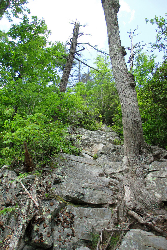 I was quite thankful I had decided to use the Cabin Trail for my <i>descent</i> and not my climb out...