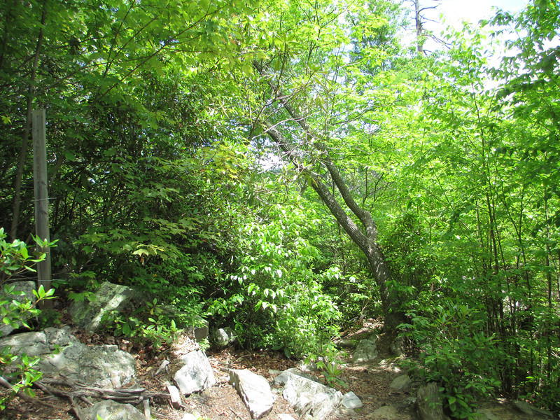Leaving the Cabin Trail behind I make a hard left onto the Linville Gorge Trail...