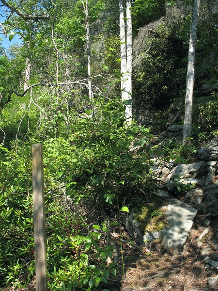 Linville Gorge-Cabin Trail Junction