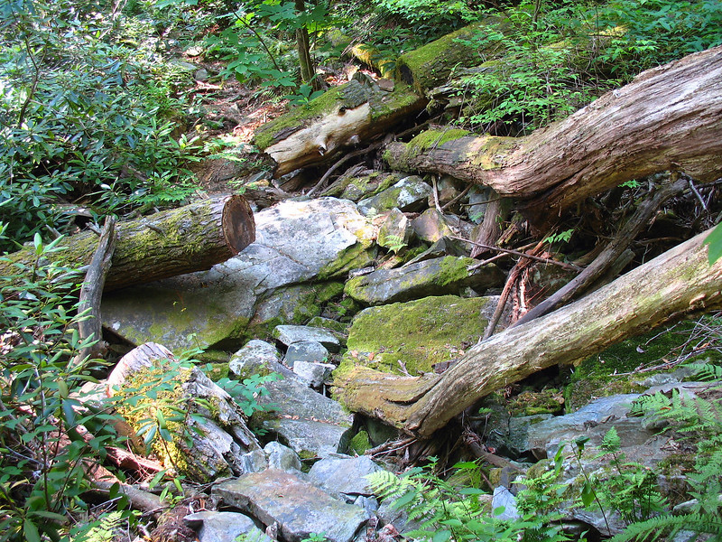 A typical section of the Linville Gorge Trail north of the Babel Tower area.