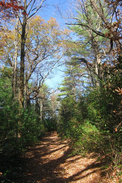 Table Rock Gap Trail (MST) -- 2,920'