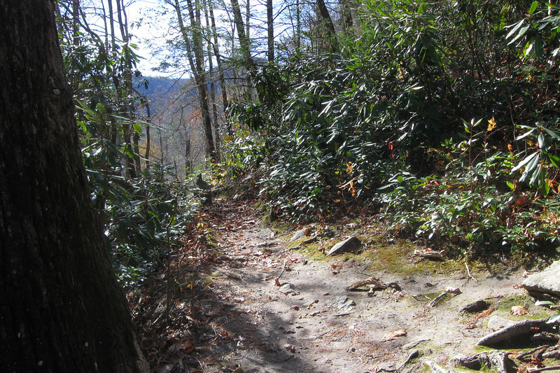The Linville Gorge Trail runs along the bottom of the gorge, I used it for about a quarter mile...
