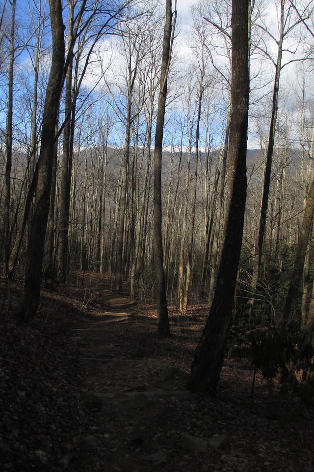The Three Sisters Ridge bids me adieu through the trees as I make my way down the last few steps of the hike...