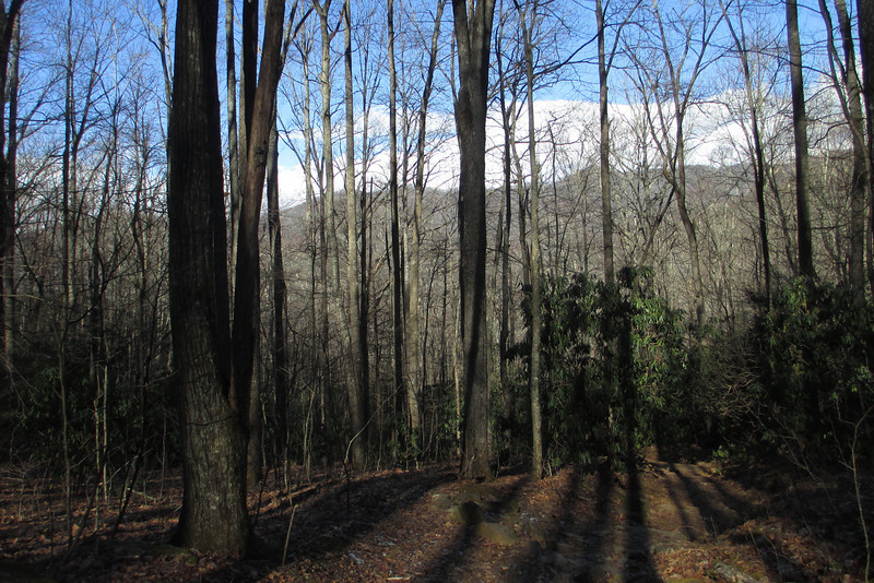 The high ridge line of the neighboring Black Mountains were ever present through the trees...