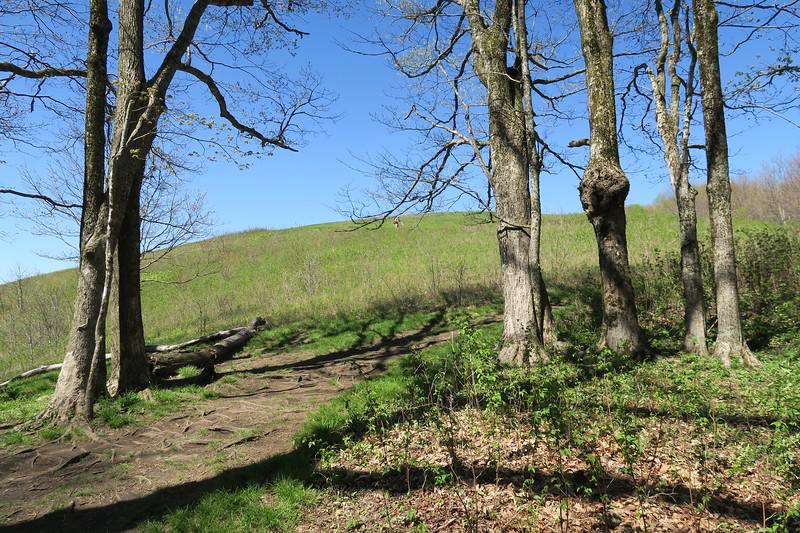 Appalachian Trail -- 4,440'