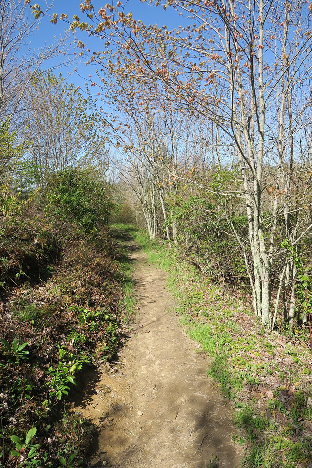Max Patch Loop Trail -- 4,360'